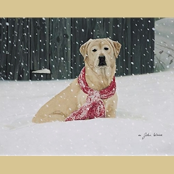 Cold Nose Warm Heart by John Weiss