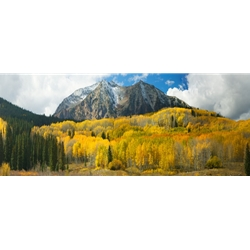 Kebler Pass, Colorado Landscape, Steamboat Springs, Photography, Art Gallery Steamboat, Aspen Trees, Giclee Print, Gallery Wrap, Barry Bailey, Mountain Traditions, Gallery, Art, Downtown Steamboat, Crested Butte Colorado