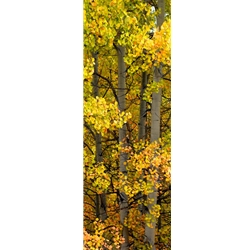Owl Creek Pass LiteColorado Landscape, Steamboat Springs, Photography, Art Gallery Steamboat, Aspen Trees, Giclee Print, Gallery Wrap, Barry Bailey, Mountain Traditions, Gallery, Art, Downtown Steamboat