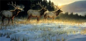 Elk Ridge by Nancy Glazier