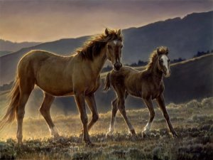 Star & Her Foal by Nancy Glazier