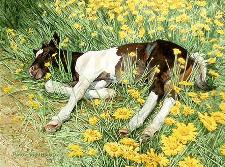 Spring Break By Bev Doolittle