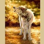 Wolfsong by Bonnie Marris
