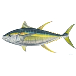 Yellow Fin Tuna by Flick Ford