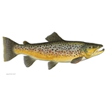 Brown Trout by Flick Ford