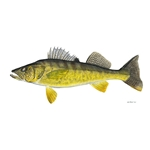 Walleye by Flick Ford
