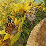 Painted Ladies by Bev Doolittle