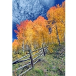 Red Aspen FenceRed Aspen Fence, Colorado Photography, Gallery Steamboat Springs,  Gallery Downtown Steamboat, Aspens, Fall Aspens,  Gallery Wrap, Giclee, Colorado Aspens, Barry Bailey, Mountain Traditions, Art, Gallery, Wall decor
