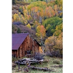 Last Dollar Barn, Colorado Photography, Gallery Steamboat Springs,  Gallery Downtown Steamboat, Aspens, Fall Aspens,  Gallery Wrap, Giclee, Colorado Aspens, Barry Bailey, Mountain Traditions, Art, Gallery, Wall decor