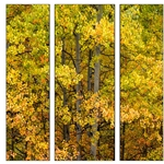 Beauty of Fall - Triptych