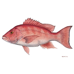 Red Snapper by Flick Ford