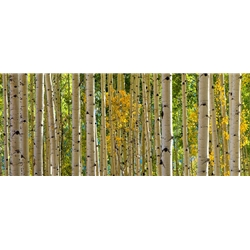 San Juan Majesty, Colorado Landscape, Steamboat Springs, Photography, Art Gallery Steamboat, Aspen Trees, Giclee Print, Gallery Wrap, Barry Bailey, Mountain Traditions, Gallery, Art, Downtown Steamboat, Durango Colorado