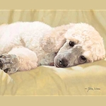 Best Loved Breeds: White Standard Poodle by John Weiss