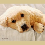 Best Loved Breeds: Golden Retriever by John Weiss