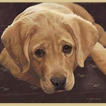 Best Loved Breeds: Yellow Labrador by John Weiss