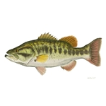 Largemouth Bass by Flick Ford