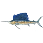 Sailfish by Flick Ford