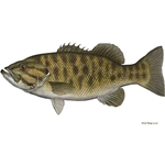 Smallmouth Bass by Flick Ford