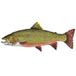 Brook Trout by Flick Ford